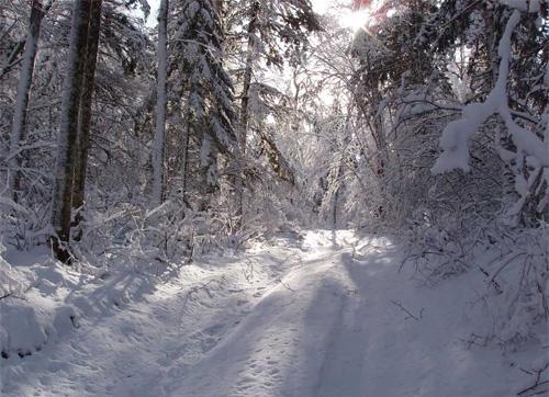 Дата закрытие зимней охоты