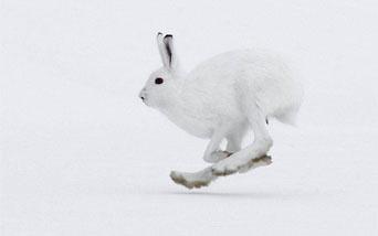 Картинки глухарь и рябчик зимой