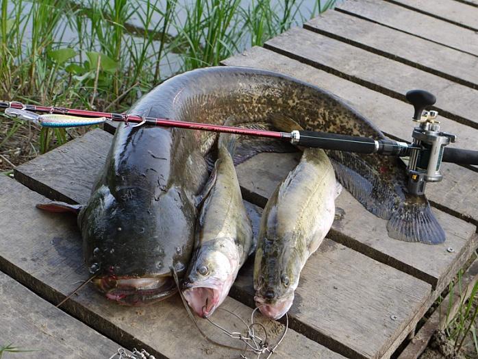 можно ли ловить рыбу с лодки сейчас